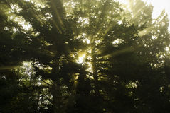 Rayos de la luz del sol Fotografía de archivo libre de regalías