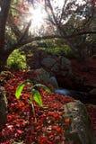 Rayos de la luz en otoño imágenes de archivo libres de regalías