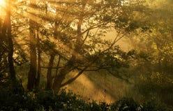 Rayos de la mañana Fotografía de archivo