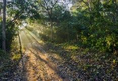 Rayos de la mañana en el bosque imagenes de archivo