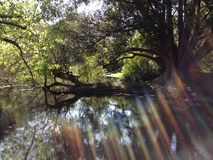 Rayos de la sol a través de árboles imagenes de archivo