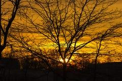 Rayos de oro que brillan abajo de rama de árbol del tiro en Amsterdam, la red Imagenes de archivo
