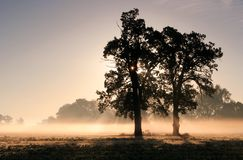 Rayos de sol fotografía de archivo libre de regalías