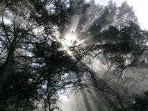 Rayos de sol Fotos de archivo