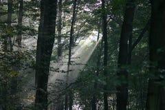 Rayos de sol Fotos de archivo libres de regalías