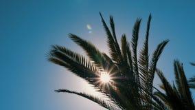 Rayos de sol brillantes a través de las palmeras verdes de las ramas y de las hojas metrajes