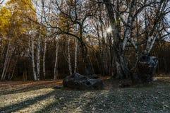 Rayos de sol en el otoño fotos de archivo