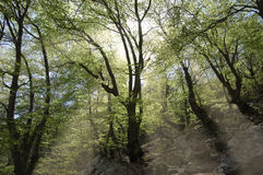Rayos de sol en las maderas fotografía de archivo