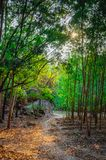 Rayos de sol impresionantes en el bosque imagen de archivo libre de regalías