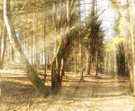 Rayos de sol que caen en la trayectoria en bosque del otoño Fotografía de archivo