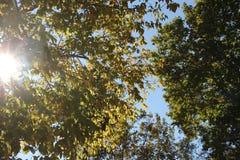 Rayos de sol a través de los árboles Fotos de archivo