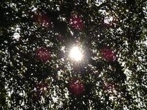 Rayos de sol a través de las hojas del árbol Foto de archivo libre de regalías