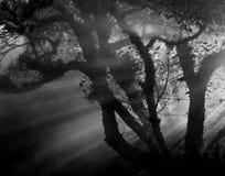Rayos de Sun Foto de archivo