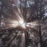 Rayos de Sun Imágenes de archivo libres de regalías
