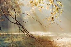 Rayos de Sun de la mañana Fotos de archivo libres de regalías