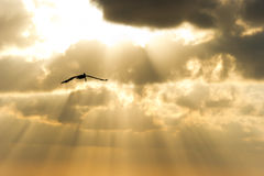Rayos de Sun de la silueta del vuelo del pájaro fotos de archivo libres de regalías