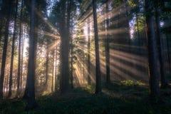 Rayos de Sun en bosque fotografía de archivo