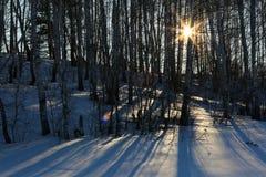 Rayos de Sun en bosque del abedul Foto de archivo
