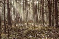 Rayos de Sun en el bosque Fotos de archivo
