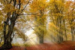 Rayos de Sun en el bosque imagen de archivo libre de regalías