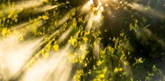 Rayos de Sun en la salida del sol imagen de archivo libre de regalías
