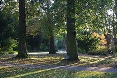 Rayos de Sun en paisaje del otoño Imágenes de archivo libres de regalías