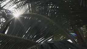 Rayos de Sun en palmera almacen de video
