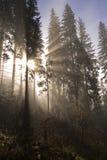 Rayos de Sun en un bosque Fotos de archivo libres de regalías