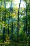 Rayos de Sun en un bosque Fotografía de archivo libre de regalías