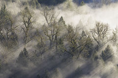 Rayos de Sun que emiten a través de la niebla en bosque Imagen de archivo libre de regalías