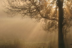 Rayos de Sun que fluyen por mañana Foto de archivo libre de regalías