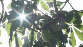 Rayos de Sun a través de las hojas del árbol almacen de video