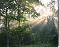 Rayos de Sun a través de los árboles Fotos de archivo libres de regalías