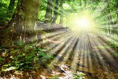 Rayos de Sun a través de ramificaciones de árbol Foto de archivo libre de regalías