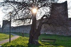 Rayos de Sun a través del árbol en la fortaleza Foto de archivo