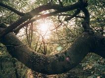 Rayos de Sun a través del bosque fotos de archivo libres de regalías