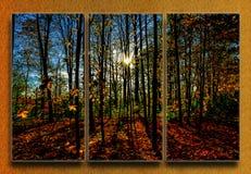 Rayos de Sun a través del bosque imagenes de archivo
