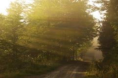 Rayos de Sun y los árboles Imagen de archivo libre de regalías