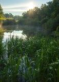 Rayos del brillo del sol naciente y un lago del bosque con una juncia costera fotografía de archivo libre de regalías