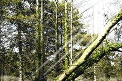 Rayos del sol en el bosque imágenes de archivo libres de regalías
