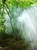 Rayos del sol en humo en el bosque imagenes de archivo