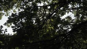 Rayos del sol entre las ramas almacen de video