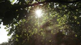 Rayos del sol entre las ramas almacen de metraje de vídeo