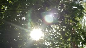 Rayos del sol a través del follaje, bokeh hermoso, movimiento vertical, backgro almacen de video