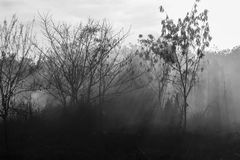 Rayos del sol y del humo de un fuego Imágenes de archivo libres de regalías
