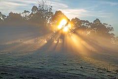 Rayos en niebla de la mañana fotografía de archivo
