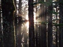 Rayos en selva Imagen de archivo libre de regalías