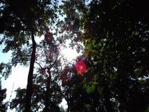 Rayos encantadores del sol Imagen de archivo libre de regalías