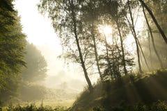 Rayos fuertes del sol a través de ramificaciones altas Foto de archivo libre de regalías
