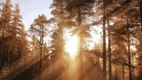 Rayos ligeros en bosque del otoño metrajes